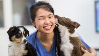 veterinarian st. paul mn