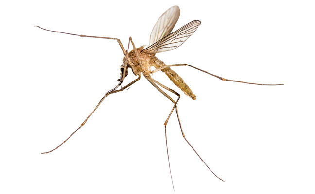 mosquito management in Berlin NJ
